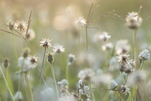 Clinical Research – Improving Seasonal Allergies with Probiotics